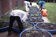 gardening / by corinne alphen