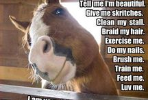 Hee HAW - Horse Funnies / Cuz you have to laugh!