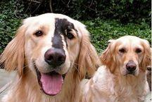 Gekke honden