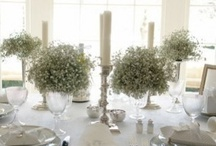 Table Settings / by Catherine Passmore