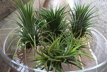 Succulents / Favorite