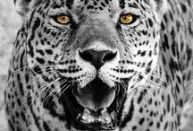 Gorgeous Cats / Wild or domestic, cats are beautiful, sleek and majestic.