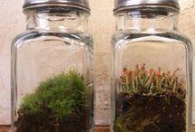 Terra-Tiny / Terrariums.