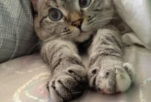 Here Kitty Kitty / Exceptionally cute or talented cats