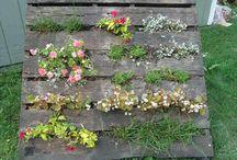 outstanding gardening ideas