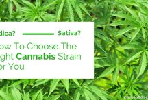 Blog Posts / Cannabis Related Blog Posts from Cannabis Care (us!)