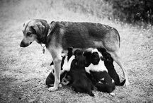 Dogs / by Jonna Vejrup