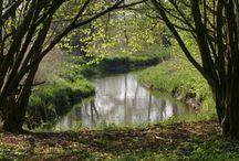 Drentsche Aa, flora en fauna / Natuur