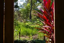 A walk in the jungle / Heading out into the jungle north of San Ignacio with good friend Manuel.