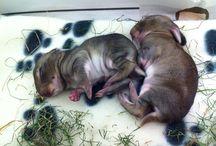 nlc.hu > Puppies / Amilyen kicsik, annyira aranyosak.