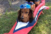 Doxies / Too Cute! / by Michael