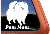 Pomeranian obsessed