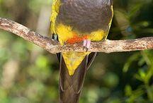 flora y fauna patagonica