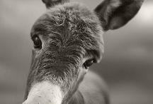 Animals / by Sharon Monday