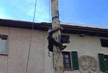 Palio della cuccagna / #CMGiochi #CMViaggi #CMItaliaViaggi
