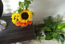 Happy plants, happy home