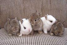 Rabbit Obsession
