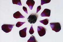 Flowerflakes