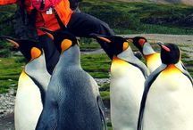 Travel | The Arctic and Antartica