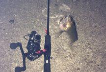釣り / 釣りLIFE