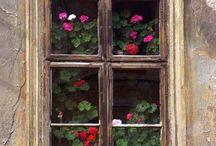Windows  II / by Tammy Augustine