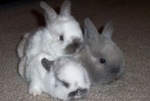 Madeline's Bunnies / by Lisa Benson