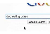 SEO & Google Videos