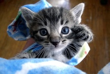 Cats.. and other mediocrely cute animals
