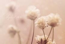 Make a Wish / by Lisa Darley-Graham