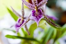 Exotic Flowers at Holualoa Inn / Beautiful flowers grace the estate  / by Holualoa Inn