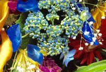 Flores Y Silletas