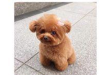 Adorable / So adorable