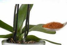 Canela en tus plantas