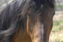 The Soul of a Horse / When you give your horse the choice of whether or not to trust you, because you care about this horse and this relationship, and you allow the horse to prove to himself that he can trust you, that you are worthy of his trust, and he chooses, of his own free will, to do so, then everything changes. Everything. You will then have a willing partner who will never stop trying for you.