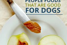 5 People Foods That Are Good For Dogs