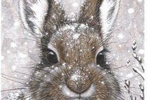 зайцы кролики