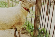 Animal I want on my farm