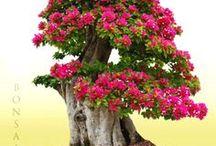 Bonsai / stromy