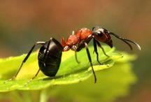 Hmyz / Je to o hmyzu třeba o mravencech