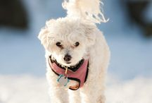 Cold weather pets / What's better than snuggling with your pet when temperatures are low? / by PetGlad