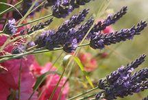 Boskloof estate plants proposal / Plants ideas