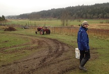 A Month At Finnriver Farm and Cidery / Photos of my time on an organic farm located in Chimacum, WA, on the Olympic Peninsula. (January, 2012) / by Jameson Fink