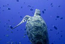 O Fantástico Mundo marinho...!