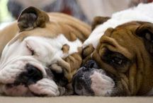 Bulldogs / The only bullies I will allow / by Joan Declet