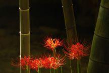 Bamboo & Flowers