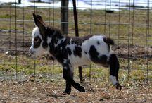 Donkeys*