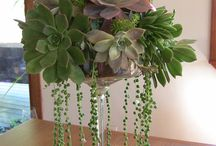 wedding centerpieces plants