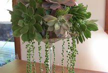 suculentas y cactus ideas