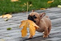 Cute Stuff / Basically me indulging in my love of pictures of baby animals