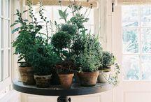 JARDINES INTERIORES <Inspiración> / #inspiración e #ideas para construir un #jardin interior YES YOU CAN https://annaand.co/post/como-tener-un-jardin-interior